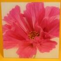 Glasbild Blüte Mohn